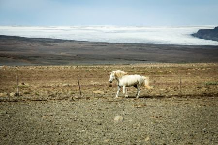 Icelandic horse treking in the Highlands