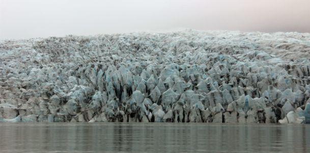Glaciertounge