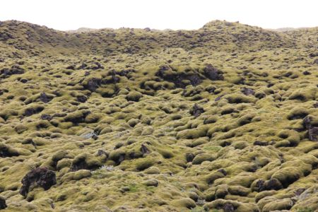 Moss covered lavafield