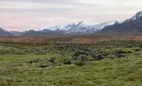 Moss clad lava fields