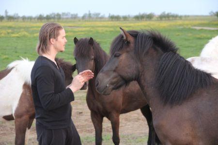 Alexander the horsewhisperer